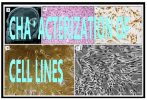 CHARACTERIZATION OF CELL LINES