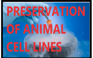 PRESERVATION OF ANIMAL CELL LINES